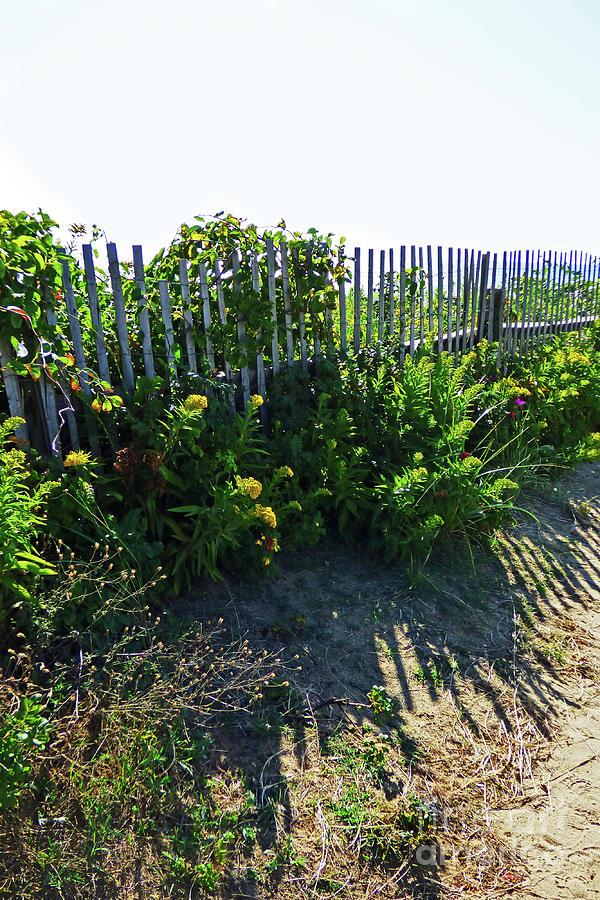 Beach Fence Shadows 300 Photograph