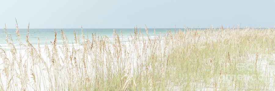 America Photograph - Beach Grass And Sea Oats Pensacola Florida Panorama by Paul Velgos