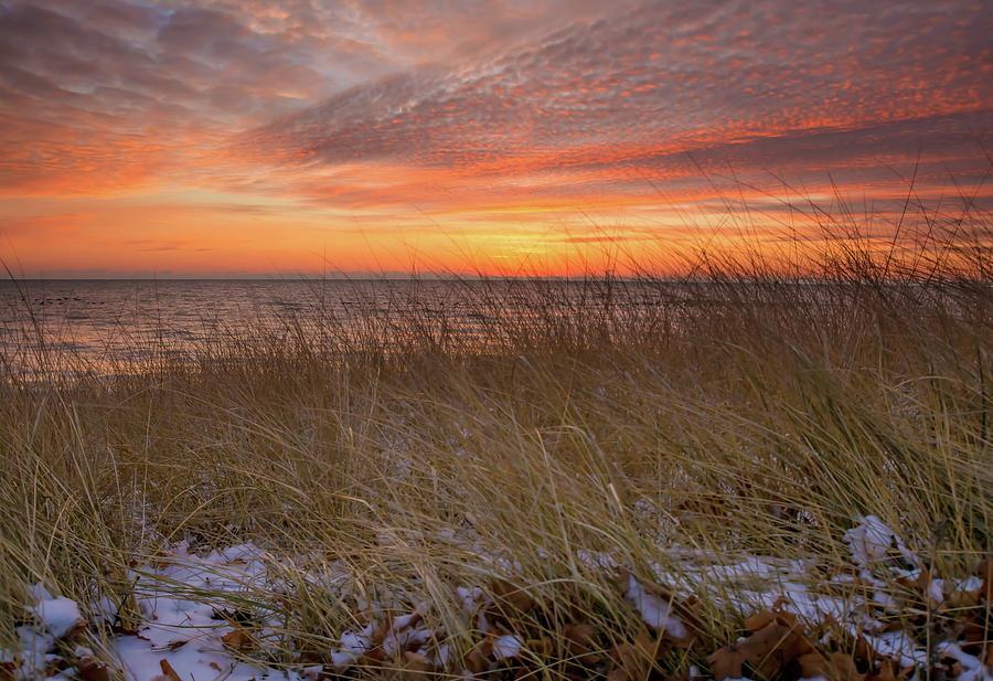Beach Grass by Patti Raine
