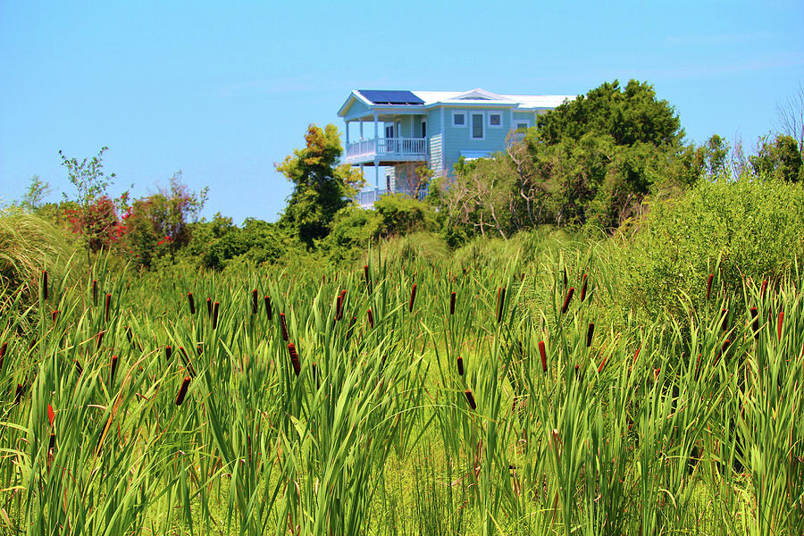 Beach House With Cattails by Cynthia Guinn
