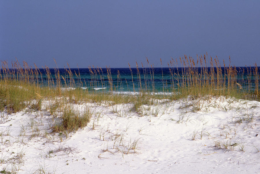 Grass Photograph - Beach On Gulf Of Mexico, Al by Sherwood Hoffman