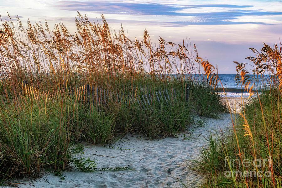Beach Path Ocean Drive by David Smith