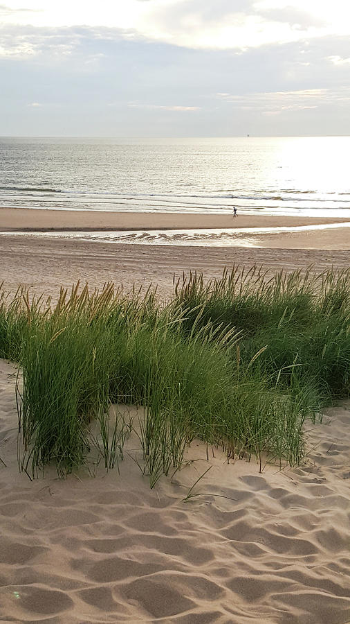beach refection sun plants grass sand wind relaxing walk hike se by Kim Vermaat