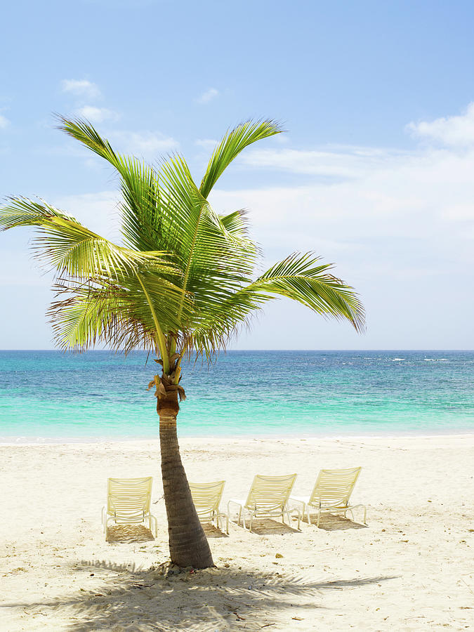 Beach Scene With Palm Tree And Lounge By Sangfoto
