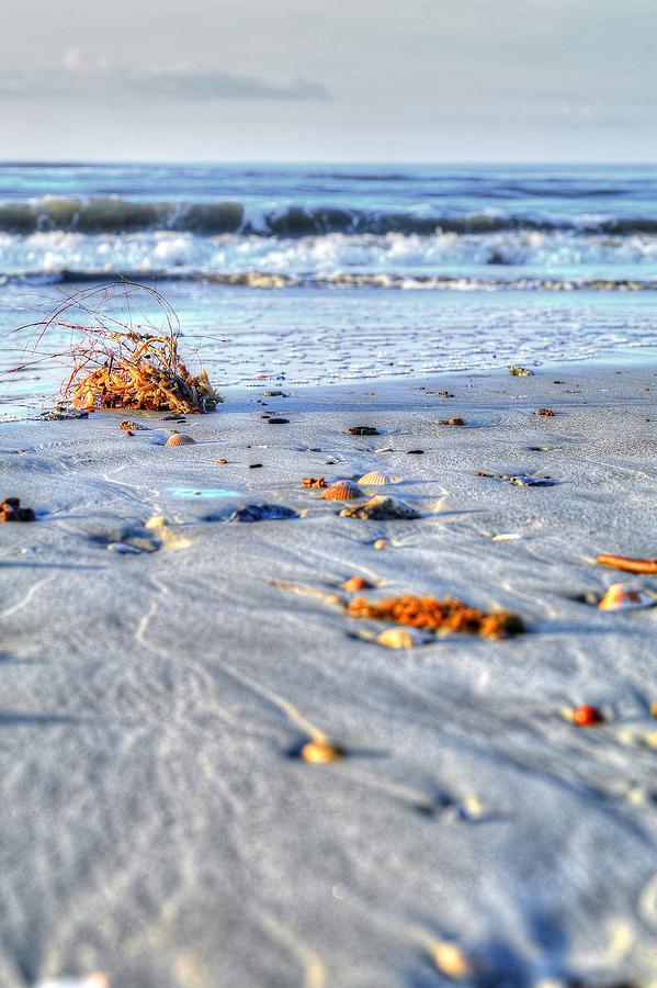 Beach Wash Up Photograph