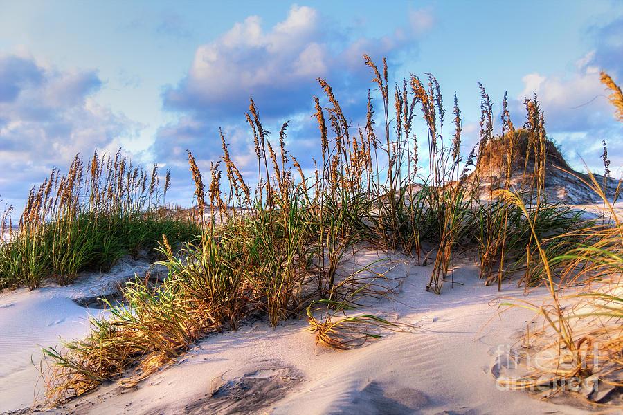 Beach Wonderland by Dan Carmichael