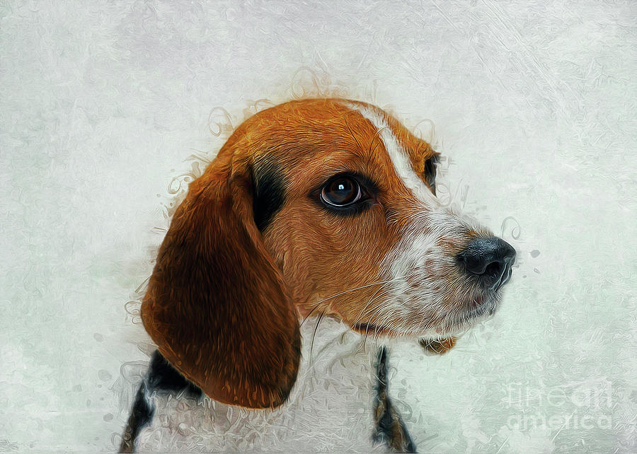 Beagle by Ian Mitchell
