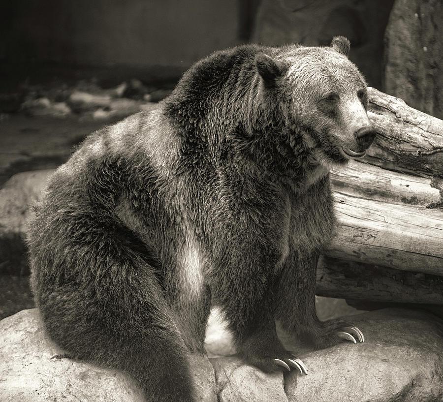 Bear  by Christopher Cutter