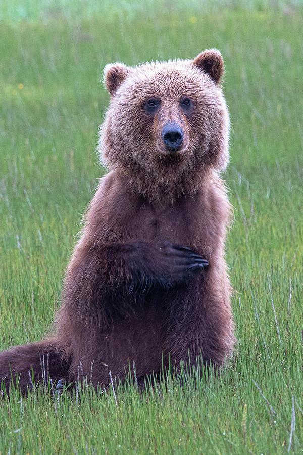 Bear by Gary Lengyel
