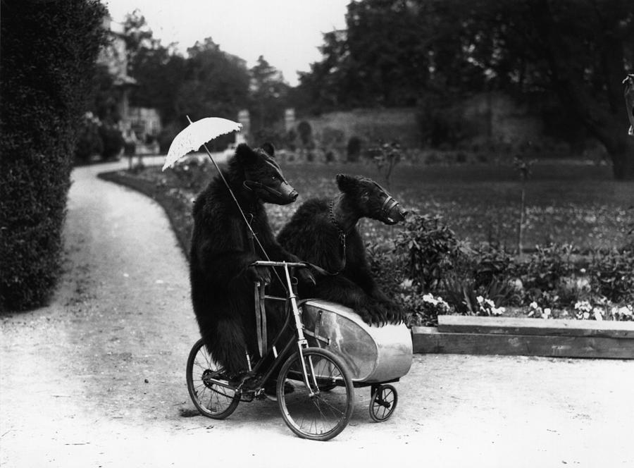 Bear Ride Photograph by Fox Photos