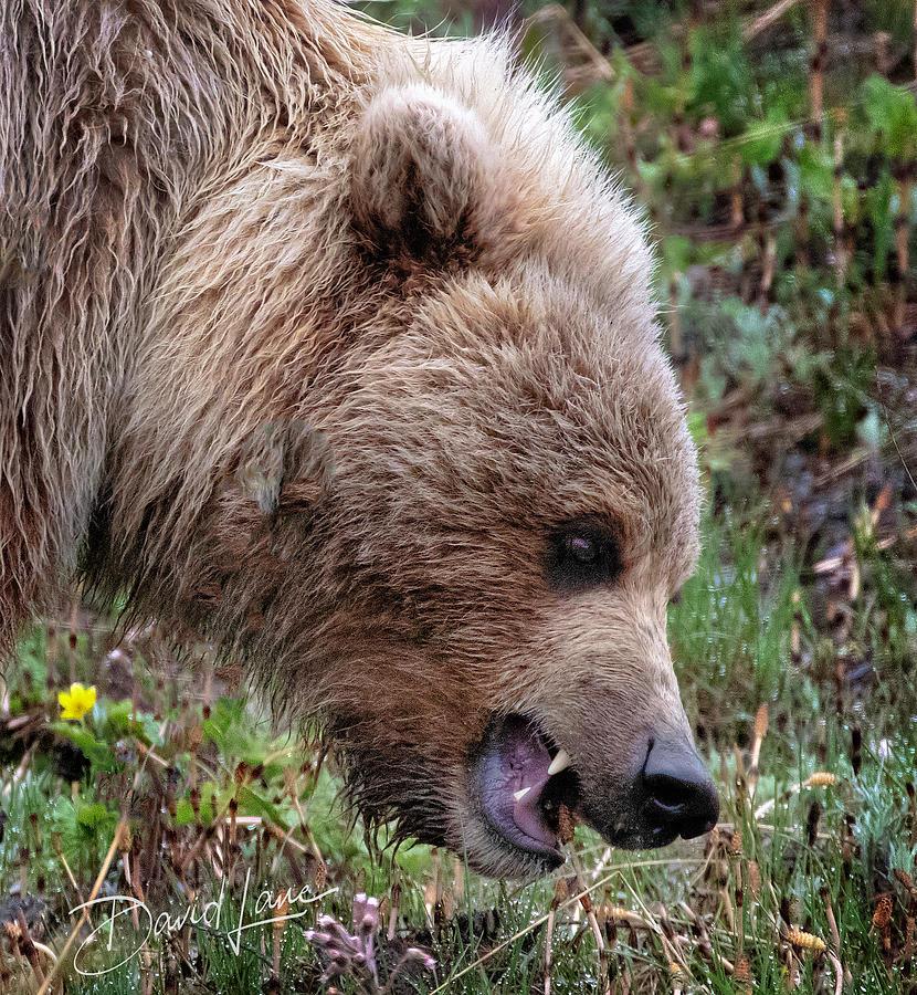 Bear Scare by David A Lane