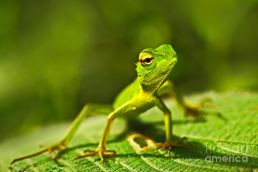 Small Photograph - Beautiful Animal In The Nature Habitat by Ondrej Prosicky