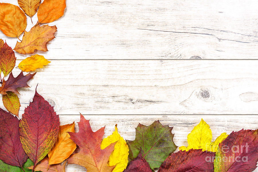 Beautiful Autumn Decoration Photograph