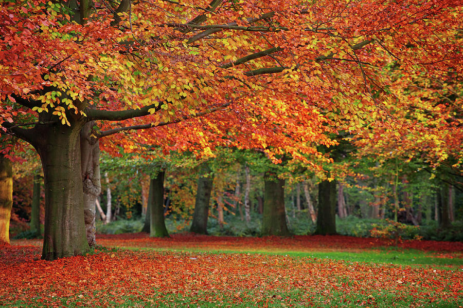 Beautiful Autumn In Park Photograph by Lorado