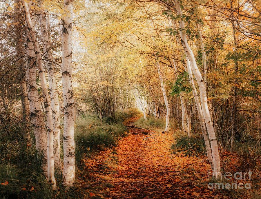 Beautiful Autumn by Susan Garver