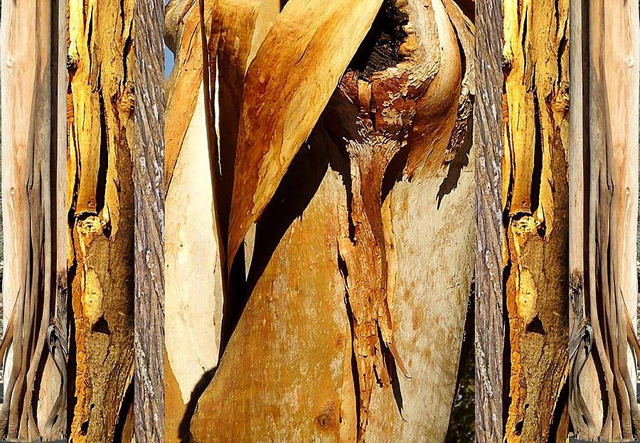 Photograph Photograph - Beautiful Bark  by Sherrie Hall
