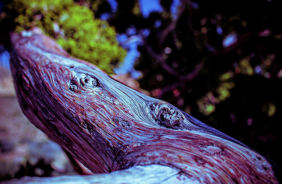 Beautiful Bark by Traci Asaurus