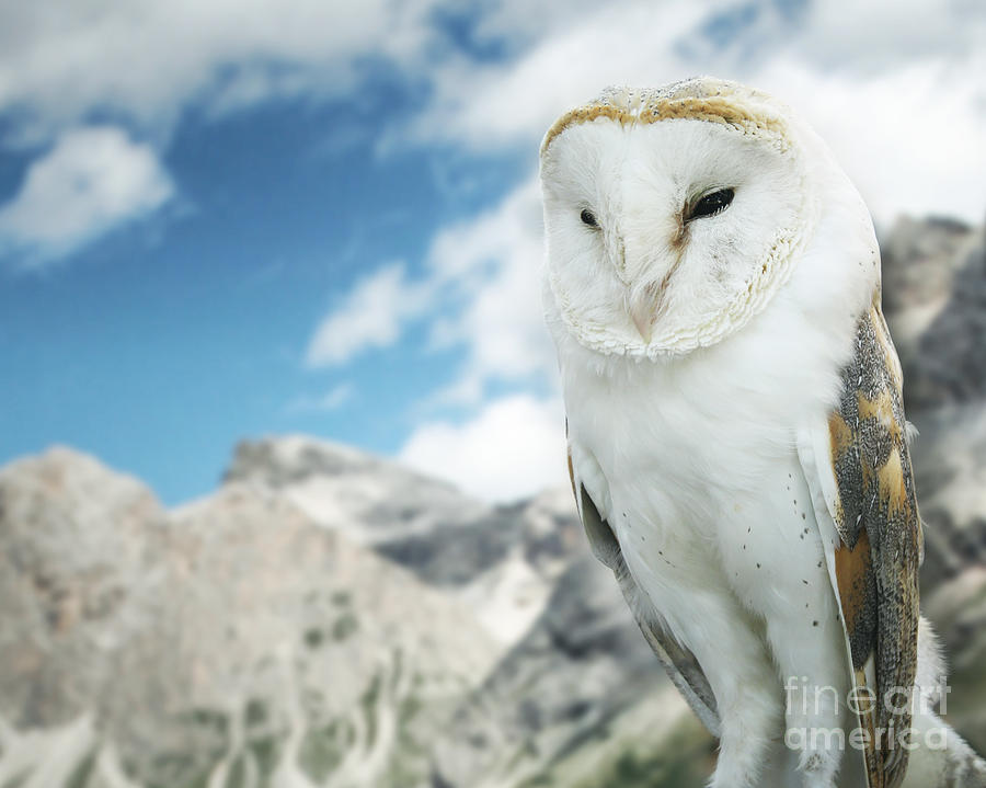 Sky Photograph - Beautiful Barn Owl In To The Wild Nature by Valentina Photos