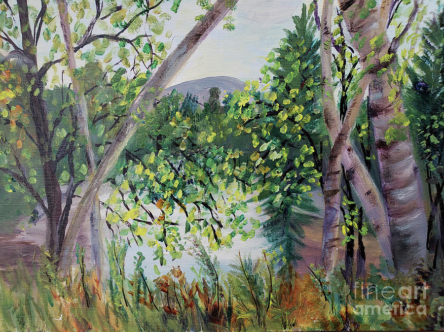 Beautiful Birches by Donna Walsh