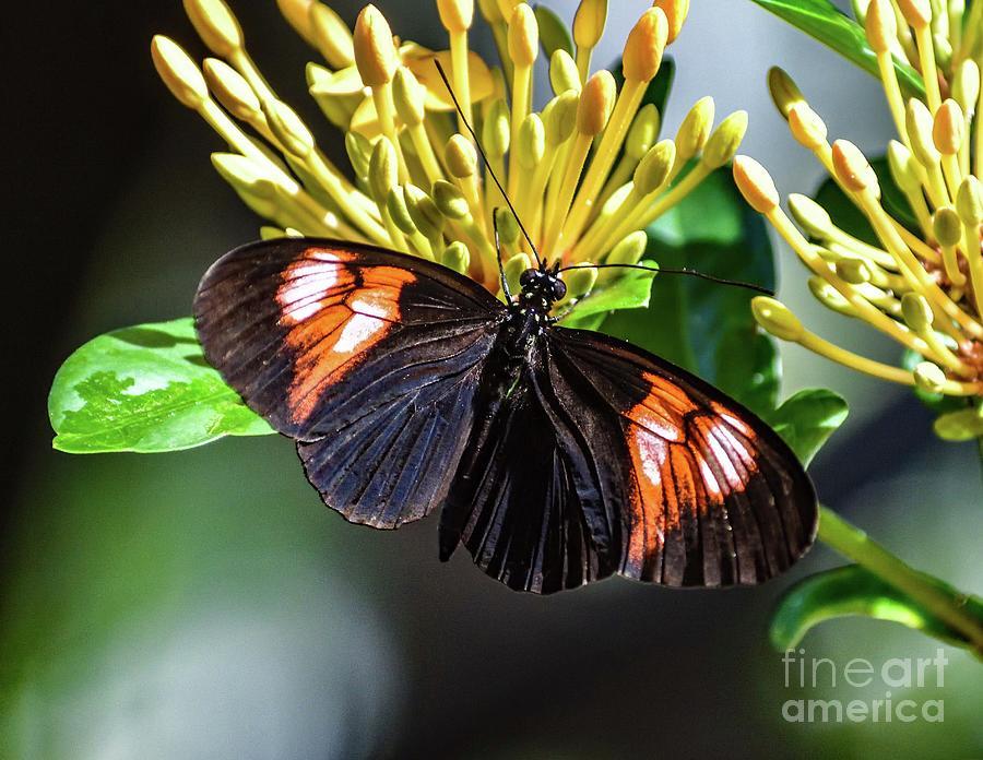 Beautiful Butterfly Photograph
