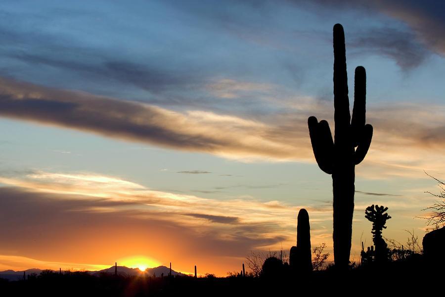 Beautiful Cactus Sunset Photograph by Markcoffeyphoto