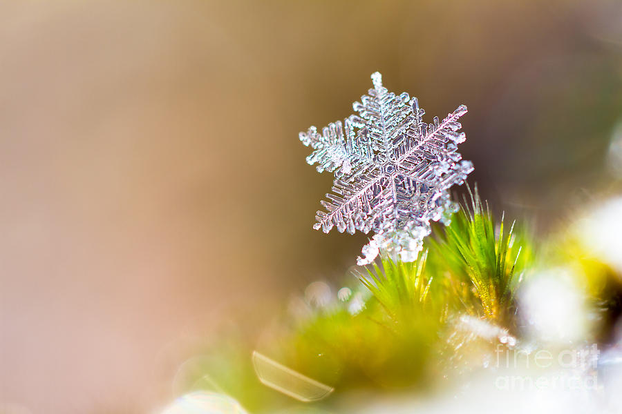 Crystal Photograph - Beautiful Close Up Image Of A Snowflake by Dennis Van De Water