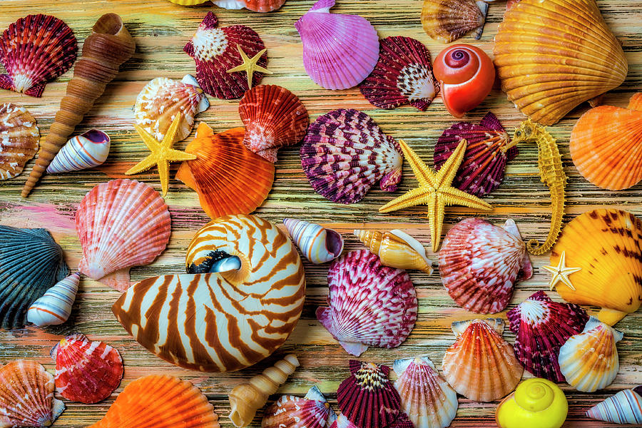 Beautiful Exotic Seashells by Garry Gay