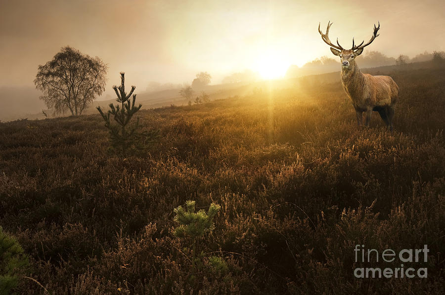 Atmosphere Photograph - Beautiful Forest Landscape Of Foggy by Matt Gibson