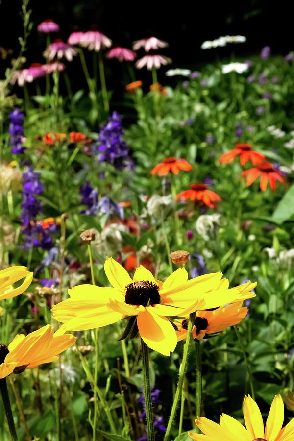 Beautiful Garden by Joe Kopp