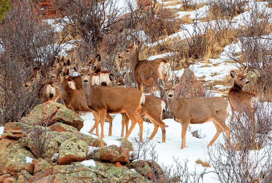 Beautiful Herd Of Deer On Mountainside Photograph