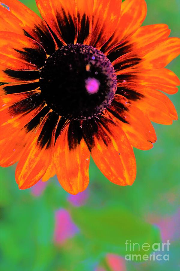 Beautiful in Orange by Merle Grenz