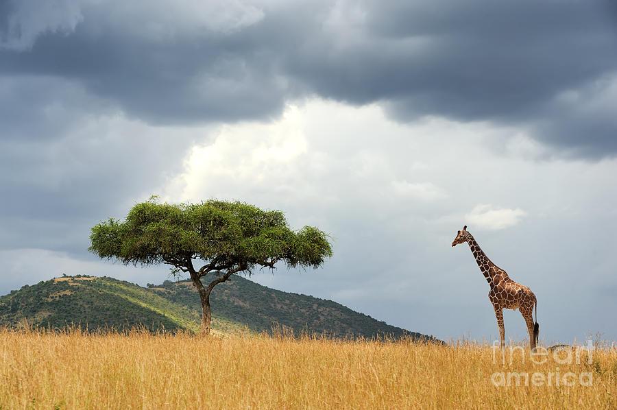 Safari Photograph - Beautiful Landscape With Nobody Tree by Volodymyr Burdiak
