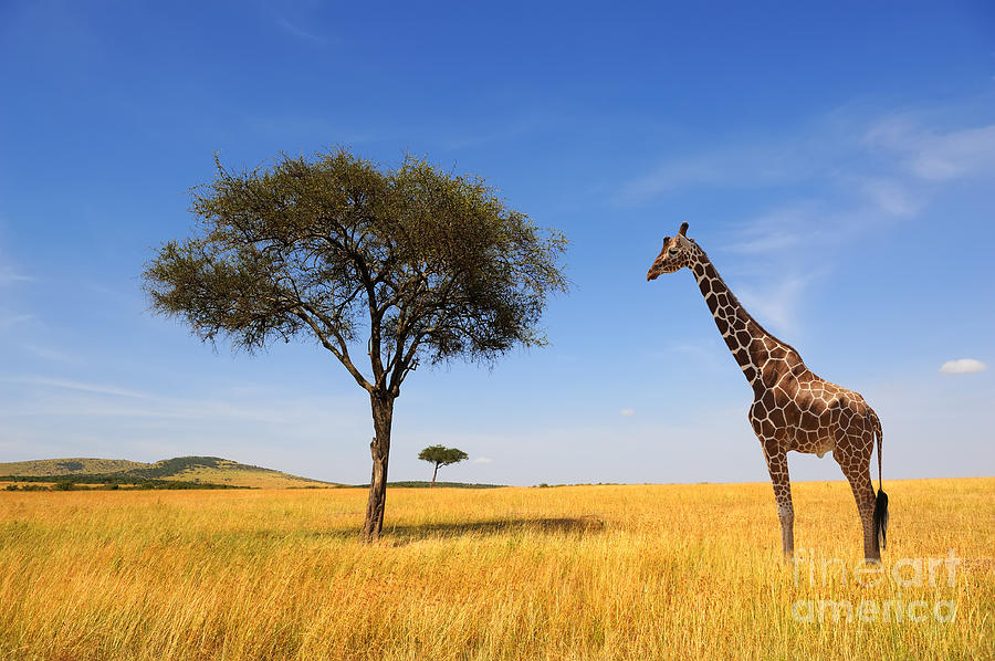 Safari Photograph - Beautiful Landscape With Tree And by Volodymyr Burdiak