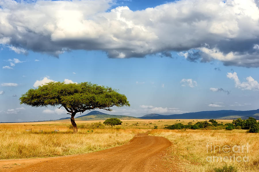 Flora Photograph - Beautiful Landscape With Tree In Africa by Volodymyr Burdiak