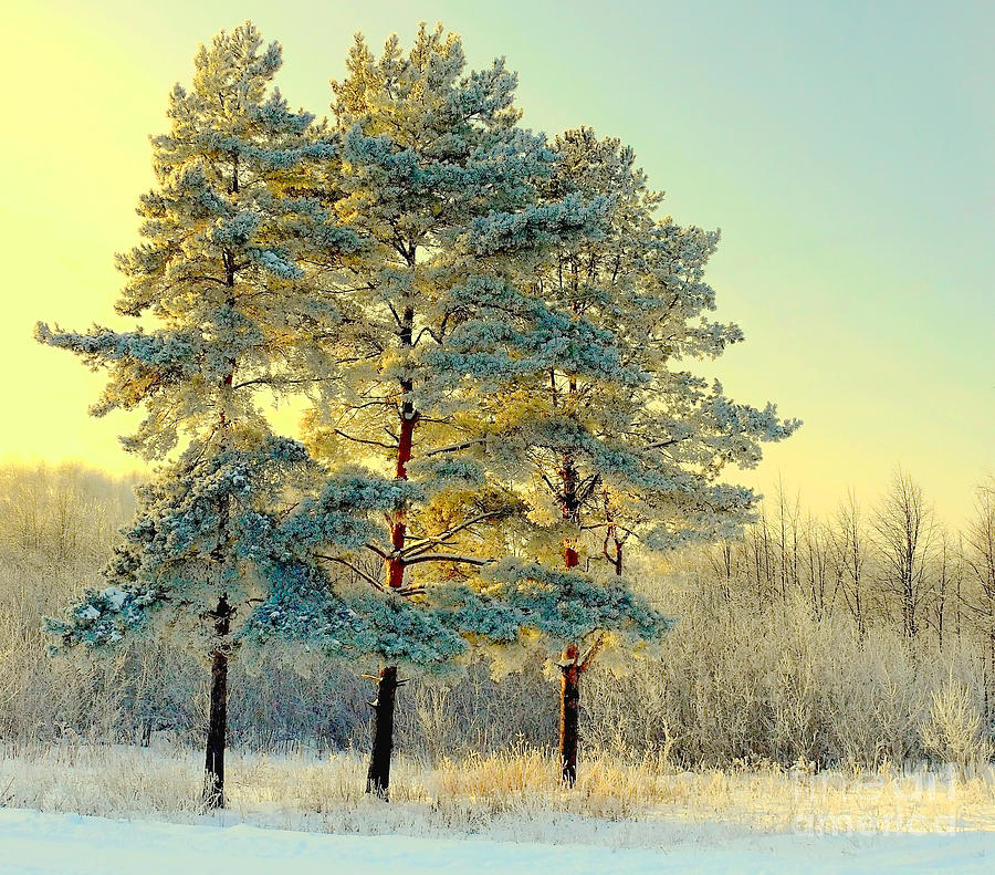 Forest Photograph - Beautiful Landscape With Winter Forest by Deserg