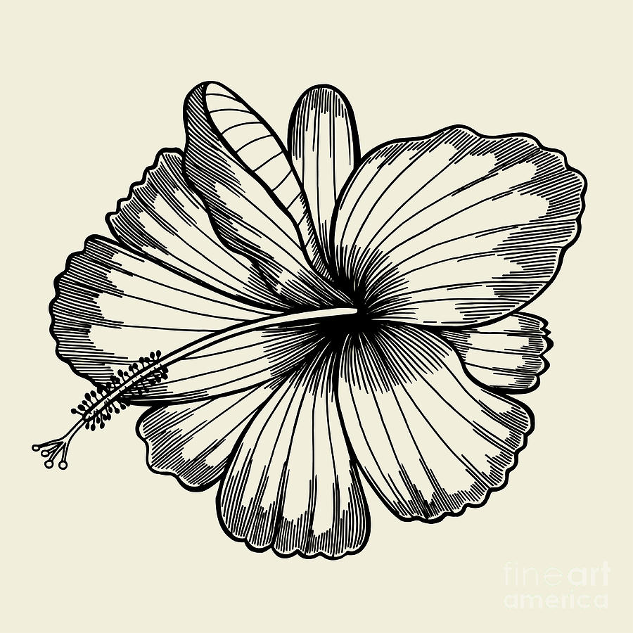 Flora Digital Art - Beautiful Lily Painted In A Graphic by Frescomovie