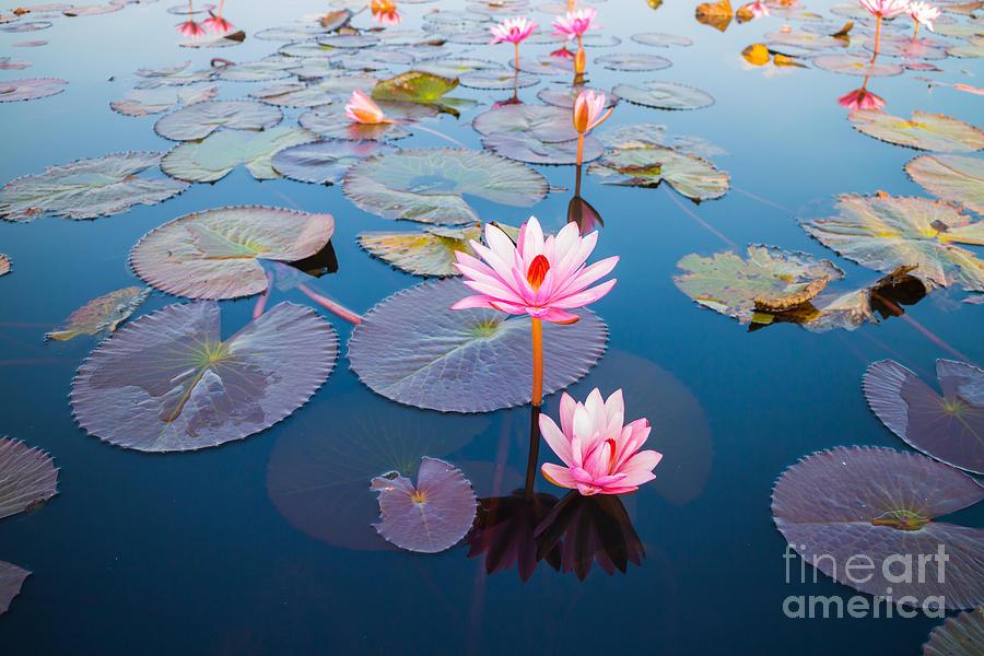 Symbol Photograph - Beautiful Lotus Flower Outdoor by Kridsada Tipchot
