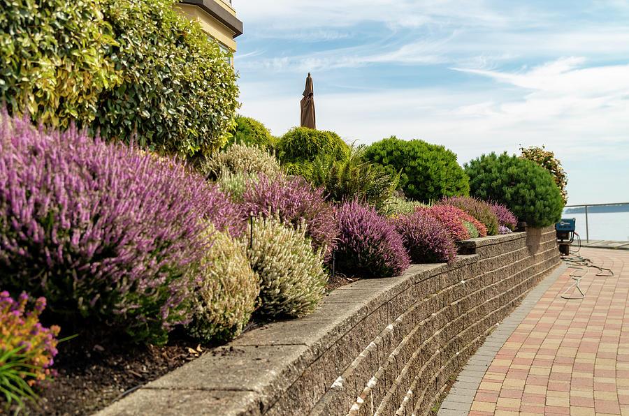 Beautiful Mixed Flower Garden Photograph