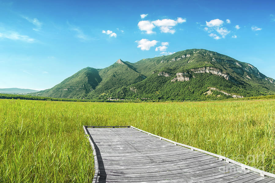 Beautiful mountain scenic with wooden footpath in field under sunlight by Gregory DUBUS