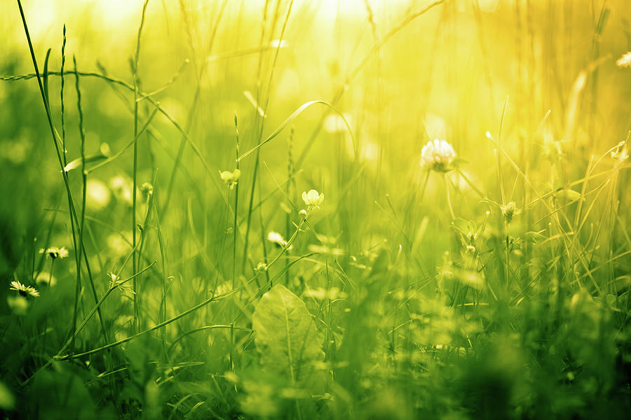 Beautiful Nature In Green And Yellow Photograph by Jeja