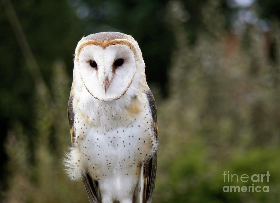Beautiful Owl Photograph By Art Sandi