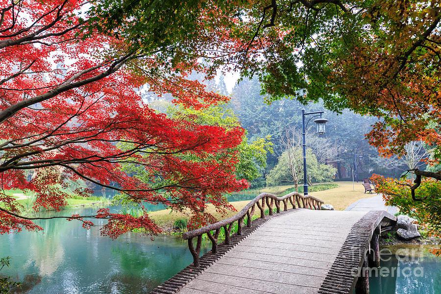 Small Photograph - Beautiful Park In Autumn by Zhao Jiankang