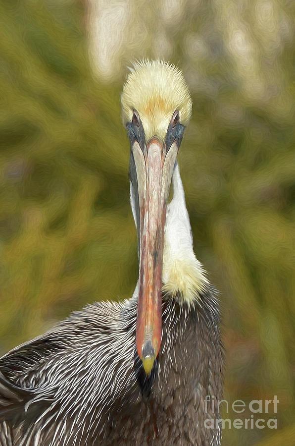 Beautiful Pelican Portrait by Kathy Baccari