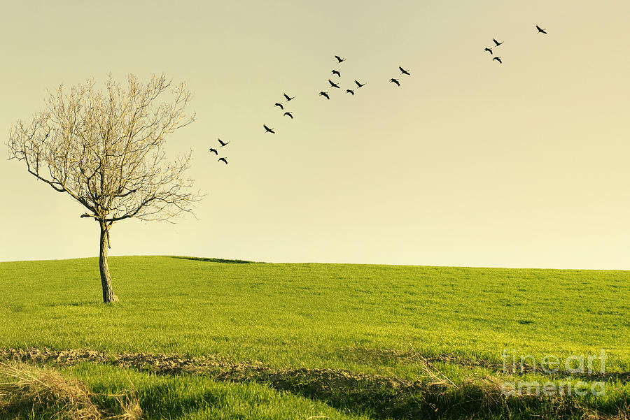 Flight Photograph - Beautiful Poetic Landscape With A Tree by Valentina Photos
