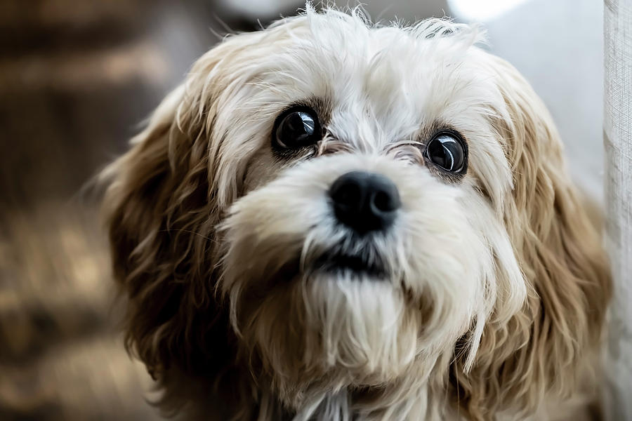 Beautiful puppy portrait  by Sven Brogren