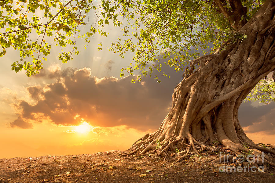 Scenic Photograph - Beautiful Scence Of Big Tree With by Twstock