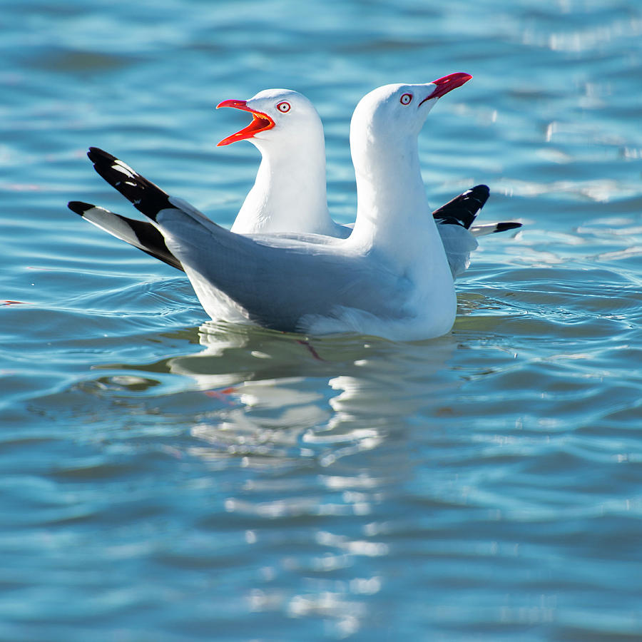 Beautiful Seagulls by Rob D Imagery