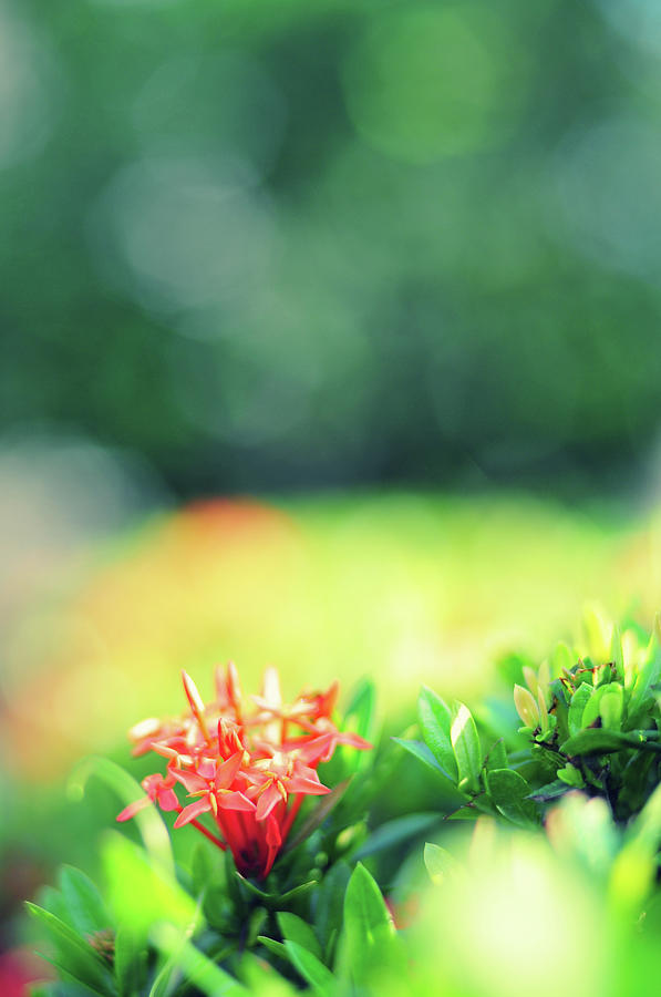 Beautiful Spring Flowers Photograph by Primeimages
