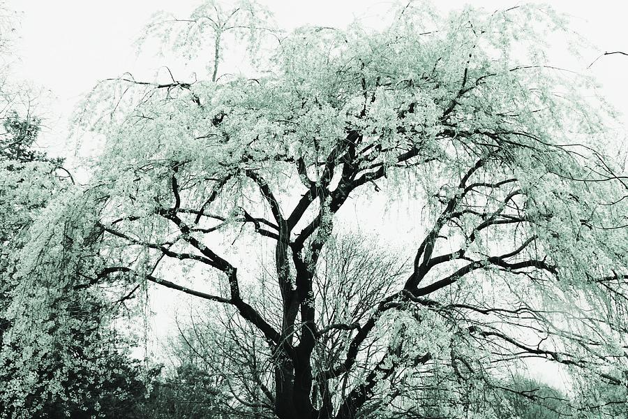 Beautiful Spring Tree by The Art Of Marilyn Ridoutt-Greene