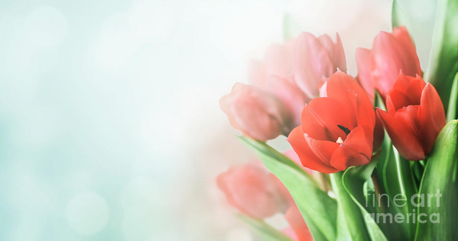 Beautiful spring tulip bouquet in garden with bokeh background.  by Jelena Jovanovic